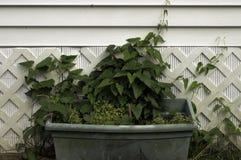 Planter Stock Photo