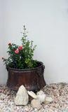 Planter met exemplaar-ruimte Stock Fotografie