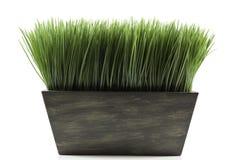Planter met gras Stock Afbeeldingen