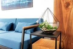 Planter op tribune naast zitkamer in flat Royalty-vrije Stock Fotografie