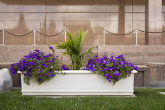 Planter Outside Marble Wall. Awhite planter with purple flowers outside a brown marble building wall Royalty Free Stock Images