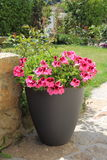 Planter with pink geranium flowers royalty free stock images