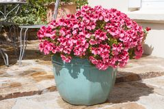 Planter with pink geranium flowers royalty free stock photography