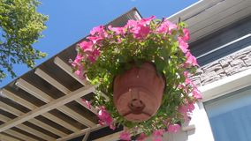 planter pot flower dangle in the wind stock video