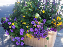 Planter predominantly blue flowered. Stock Image