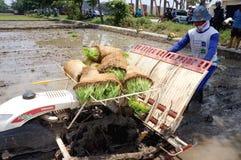 Planter rice Royalty Free Stock Image