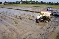 Planter rice Stock Photography