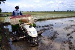 Planter rice Stock Photo