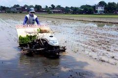 Planter rice Royalty Free Stock Photos