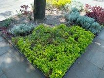 Planter rond de bomen om meer leven in het park te geven stock afbeeldingen