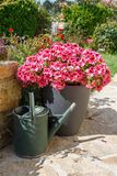 Planter and watering can with pink geranium flowers royalty free stock images