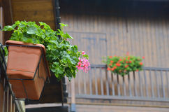 Free Planter With Pink Flowers Royalty Free Stock Photography - 34148807