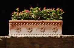 Planter in Zon Royalty-vrije Stock Afbeelding