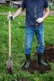 Plantera äppleträd Royaltyfri Bild