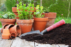 plantera Arkivfoton