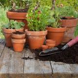 plantera Royaltyfria Foton
