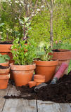 plantera Royaltyfri Fotografi