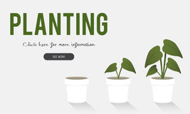 Plantera arbeta i trädgården den globala blommalantgården Arkivfoton