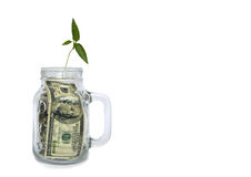 Plantera att växa i krus med dollar på vit bakgrund arkivfoto