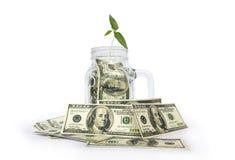 Plantera att växa i krus med dollar på vit bakgrund royaltyfri foto