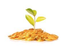 Plantera att växa ut ur guld- mynt som isoleras på vit Royaltyfri Bild