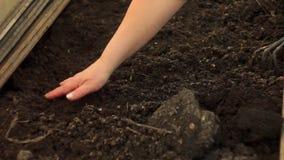 Plantera av frö vid handen stock video