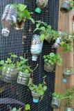 Plantera blommor och grönsaker i plast- behållare Arkivbild