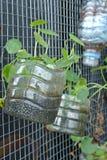 Plantera blommor och grönsaker i plast- behållare Arkivfoto