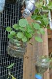 Plantera blommor och grönsaker i plast- behållare Arkivfoton