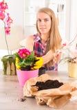 Plantera colorfullblomman i en blomkruka arkivfoton