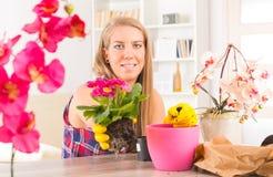 Plantera colorfullblomman i en blomkruka fotografering för bildbyråer