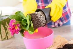 Plantera colorfullblomman i en blomkruka royaltyfri foto