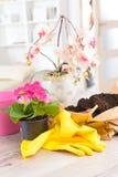Plantera colorfullblomman i en blomkruka royaltyfri bild