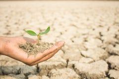 Plantera den mjuka fokusen, fotoet för att plantera träd, för att återställa fullständighet Arkivfoton