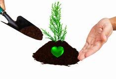 plantera den små treen Fotografering för Bildbyråer