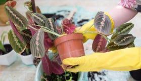 Plantera en blomma. royaltyfria bilder