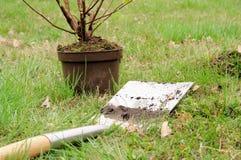 Plantera en buske royaltyfri foto