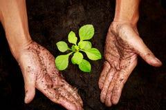 Plantera en tree På det slipat Royaltyfria Bilder