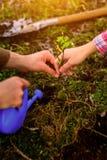 Plantera ett träd, nytt liv Arkivbilder