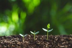 Plantera ett träd som bevattnar ett träd i natur royaltyfri foto