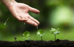 Plantera ett träd, väx kaffeträd, friskhet, händer som skyddar träd och att bevattna och att växa, gräsplan, Arkivbilder
