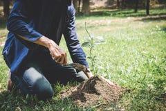 Plantera ett tr?d, planterade tv? h?nder av ung man plantorna och tr?det som v?xer in i jord, medan arbeta i tr?dg?rden som r?ddn fotografering för bildbyråer