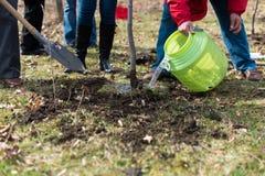 Plantera ett träd Fotografering för Bildbyråer