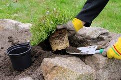 Plantera för buske arkivbild