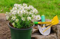 Plantera för buske royaltyfria bilder
