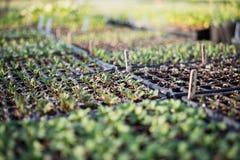 Plantera för en ny trädgård 1 arkivfoto