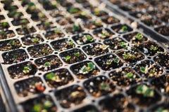 Plantera för en ny trädgård 2 Fotografering för Bildbyråer