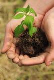 plantera för händer som är skyddande Royaltyfri Bild