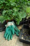 plantera fjädern Royaltyfri Foto