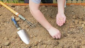 Plantera frö i en trädgård stock video
